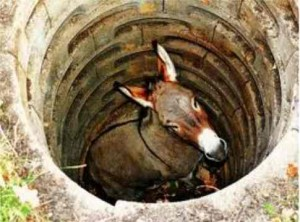 Picture of donkey in the well