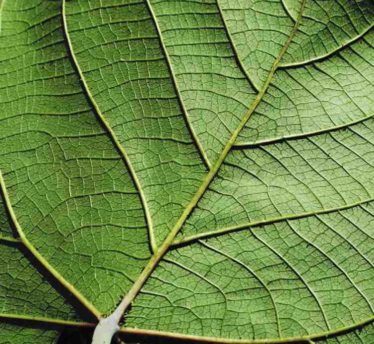 Picture of leaf depicting life and renewal