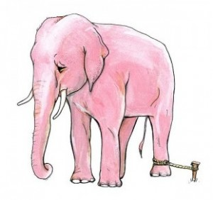 Elephant And Rope