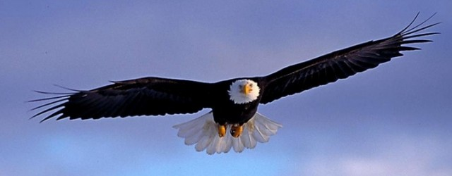 Eagles Soar